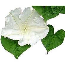 Moonflower BTY Denise Urban Quilting Treasure Lite Yellow White Floral Medallion