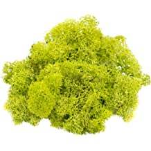 for Fairy Gardens Pink Moss | Plus Free Nautical Ebook by Joseph Rains Reindeer Moss Preserved Terrariums 2 Ounces or Any Craft or Floral Project |